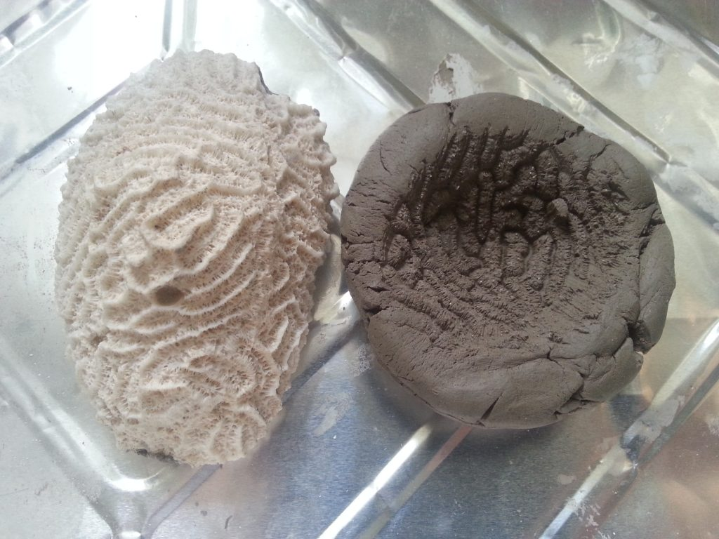 Debbie Tomkies - Assignment 3 - Moulding from a surface - coral and clay